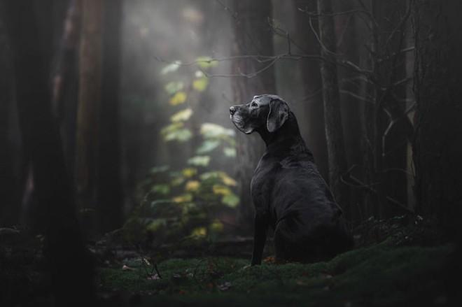 Ảnh chó đẹp nhất năm 2018: Tôn vinh bạn tốt nhất của con người qua những thước phim đầy cảm xúc - Ảnh 1.