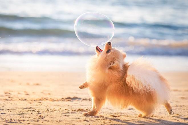 Ảnh chó đẹp nhất năm 2018: Tôn vinh bạn tốt nhất của con người qua những thước phim đầy cảm xúc - Ảnh 2.