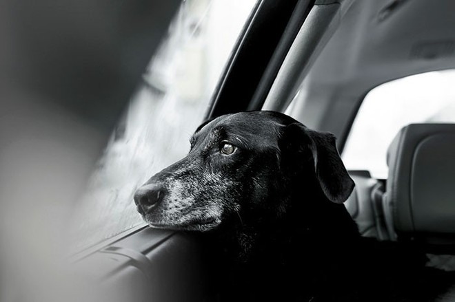 Ảnh chó đẹp nhất năm 2018: Tôn vinh bạn tốt nhất của con người qua những thước phim đầy cảm xúc - Ảnh 7.