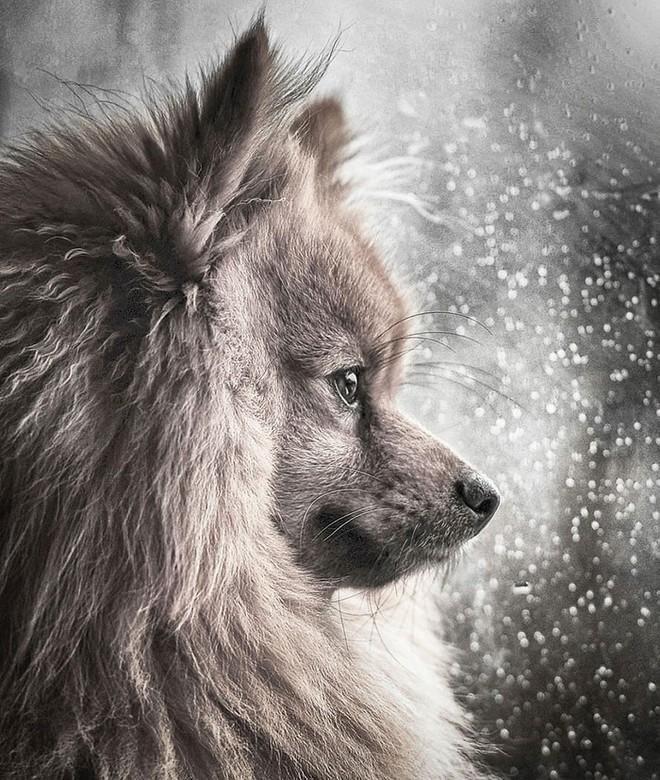 Ảnh chó đẹp nhất năm 2018: Tôn vinh bạn tốt nhất của con người qua những thước phim đầy cảm xúc - Ảnh 9.