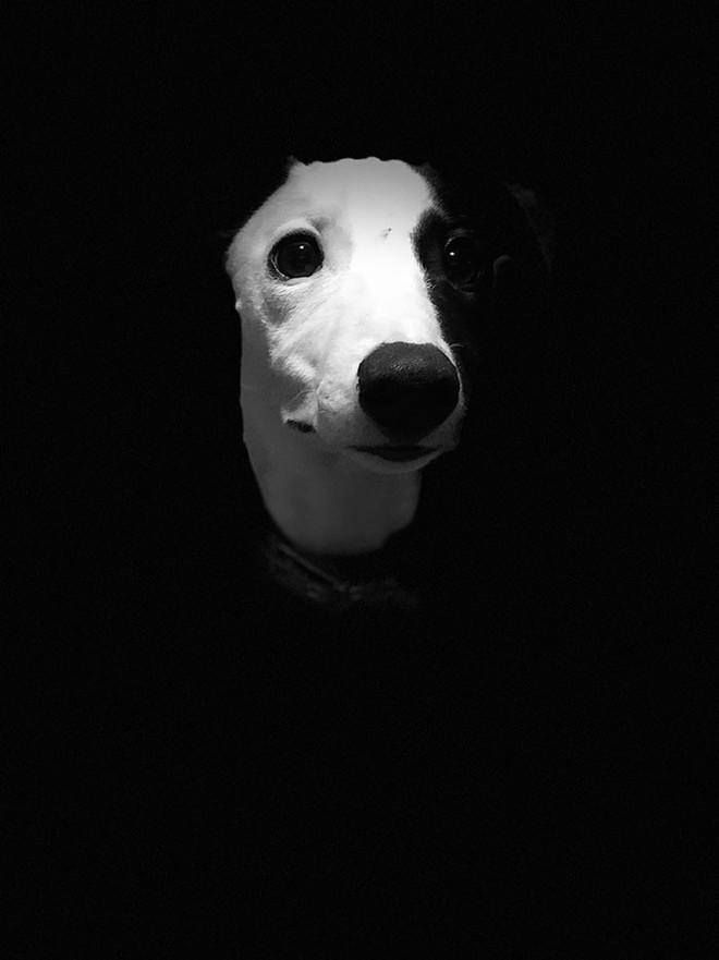 Ảnh chó đẹp nhất năm 2018: Tôn vinh bạn tốt nhất của con người qua những thước phim đầy cảm xúc - Ảnh 10.