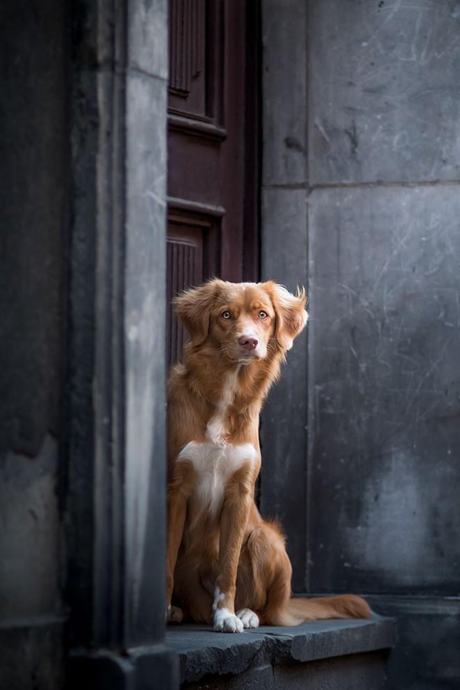Ảnh chó đẹp nhất năm 2018: Tôn vinh bạn tốt nhất của con người qua những thước phim đầy cảm xúc - Ảnh 12.
