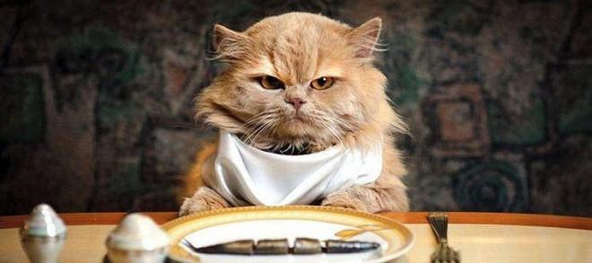 Mèo và các doanh nhân thành đạt: có mối liên hệ rất quái đản mà bạn sẽ không bao giờ nghĩ đến - Ảnh 1.