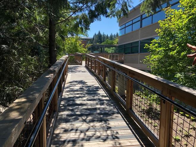 Chiêm ngưỡng ngôi nhà trên cây mà Microsoft làm cho nhân viên: Gặp gỡ, làm việc hay tắm nắng đều được - Ảnh 12.