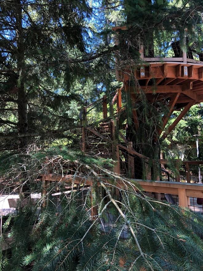 Chiêm ngưỡng ngôi nhà trên cây mà Microsoft làm cho nhân viên: Gặp gỡ, làm việc hay tắm nắng đều được - Ảnh 14.