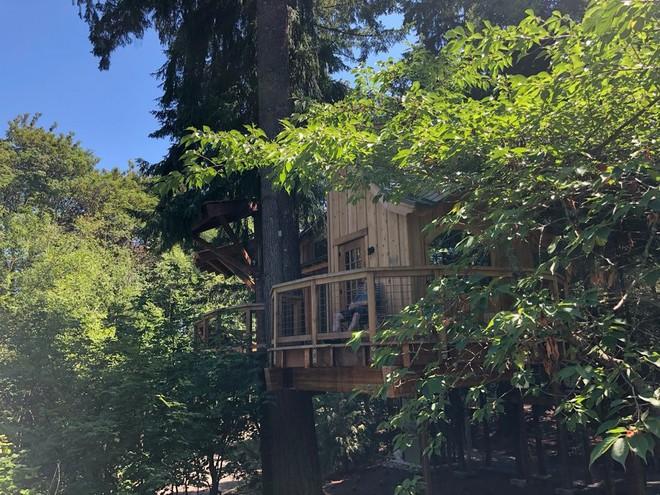 Chiêm ngưỡng ngôi nhà trên cây mà Microsoft làm cho nhân viên: Gặp gỡ, làm việc hay tắm nắng đều được - Ảnh 15.