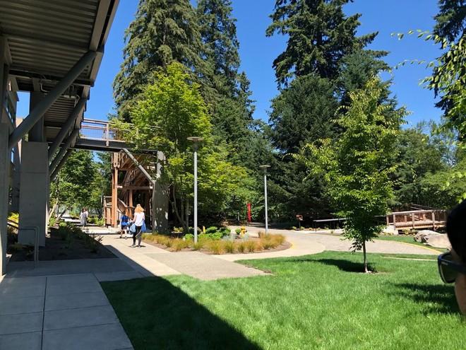 Chiêm ngưỡng ngôi nhà trên cây mà Microsoft làm cho nhân viên: Gặp gỡ, làm việc hay tắm nắng đều được - Ảnh 2.