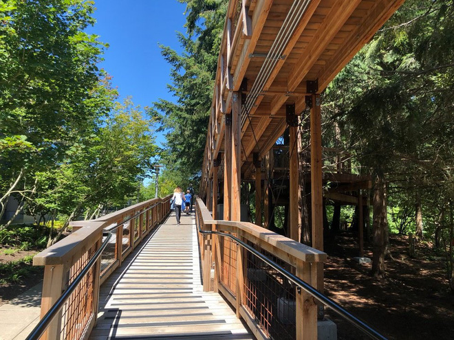 Chiêm ngưỡng ngôi nhà trên cây mà Microsoft làm cho nhân viên: Gặp gỡ, làm việc hay tắm nắng đều được - Ảnh 3.