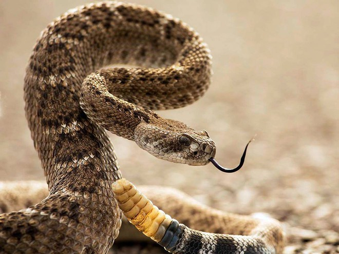 Lấy thân đỡ nhát rắn cắn chí mạng cho cô chủ, chú chó 6 tháng tuổi được ca ngợi như anh hùng - Ảnh 2.