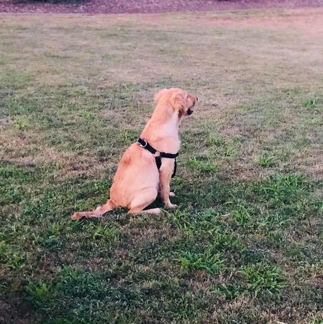 Lấy thân đỡ nhát rắn cắn chí mạng cho cô chủ, chú chó 6 tháng tuổi được ca ngợi như anh hùng - Ảnh 9.