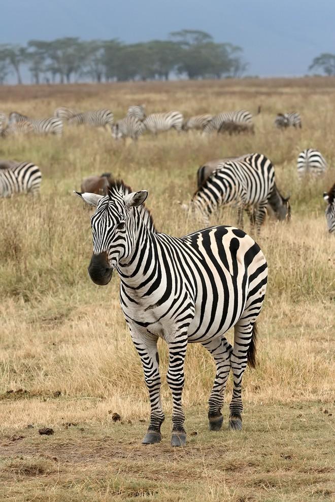 Xì hơi trong thế giới động vật: có loài xì hơi, có loài không, có loài lại phải cố xì hơi để mà sống - Ảnh 7.