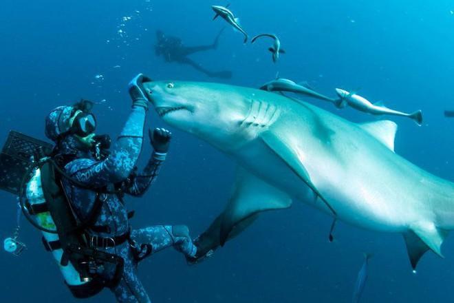"""Cận cảnh khoảnh khắc hiếm có khi các thợ lặn chơi đùa với """"sát thủ đại dương"""" - Ảnh 3."""
