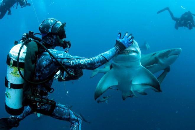 """Cận cảnh khoảnh khắc hiếm có khi các thợ lặn chơi đùa với """"sát thủ đại dương"""" - Ảnh 2."""