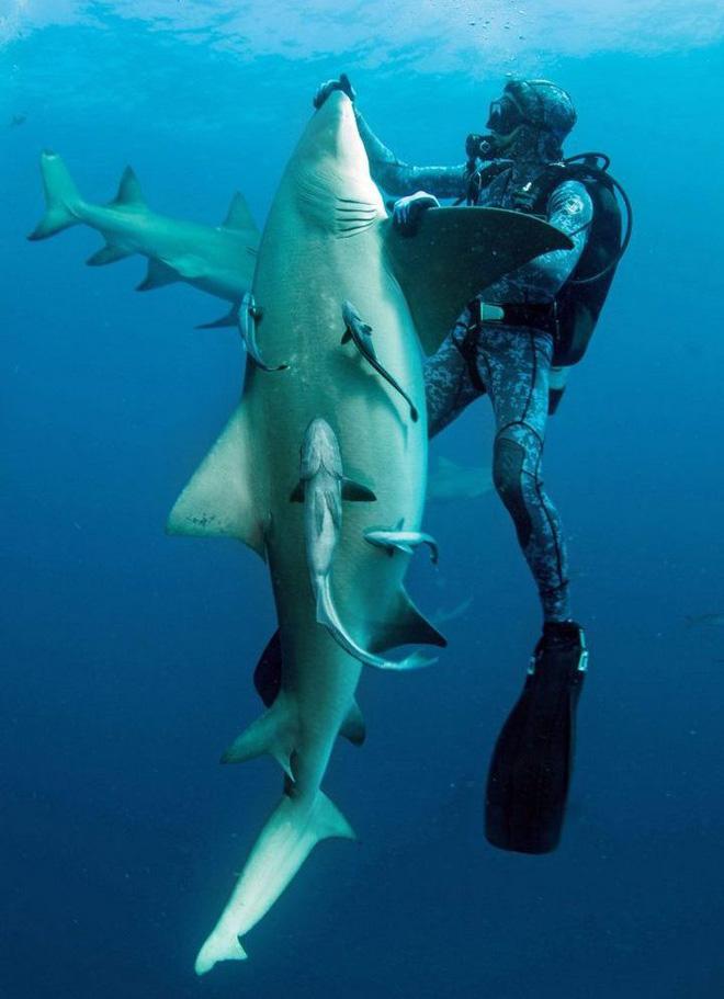 """Cận cảnh khoảnh khắc hiếm có khi các thợ lặn chơi đùa với """"sát thủ đại dương"""" - Ảnh 4."""