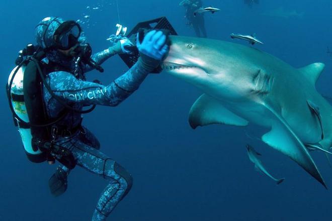 """Cận cảnh khoảnh khắc hiếm có khi các thợ lặn chơi đùa với """"sát thủ đại dương"""" - Ảnh 1."""