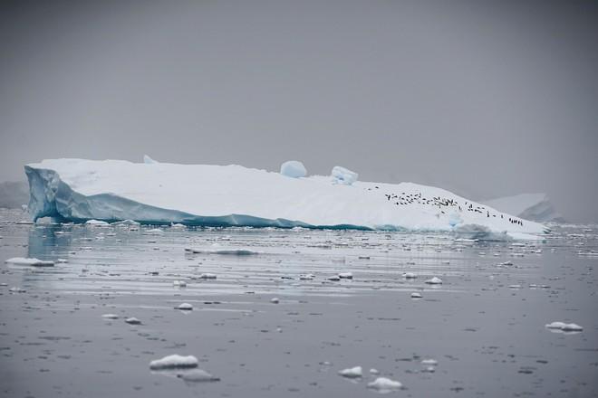 Ý tưởng điên rồ: Ship tảng băng khổng lồ từ Nam Cực về để giải quyết khủng hoảng nước ngọt tại Cape Town - Ảnh 1.