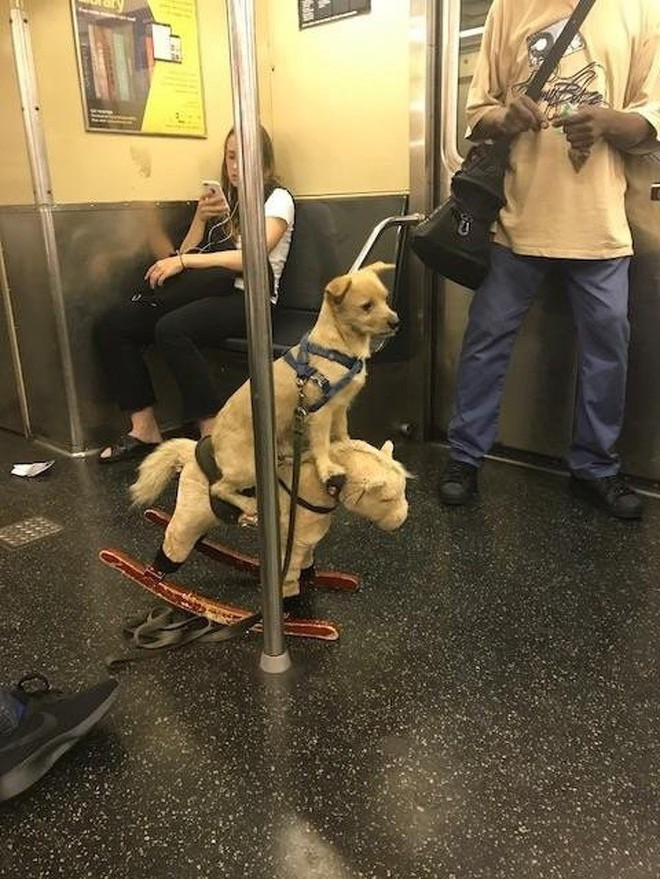[Vui] 20 bức ảnh sẽ chứng minh cho bạn thấy: Thế giới trên tàu điện ngầm luôn ngập tràn những điều kỳ lạ - Ảnh 10.