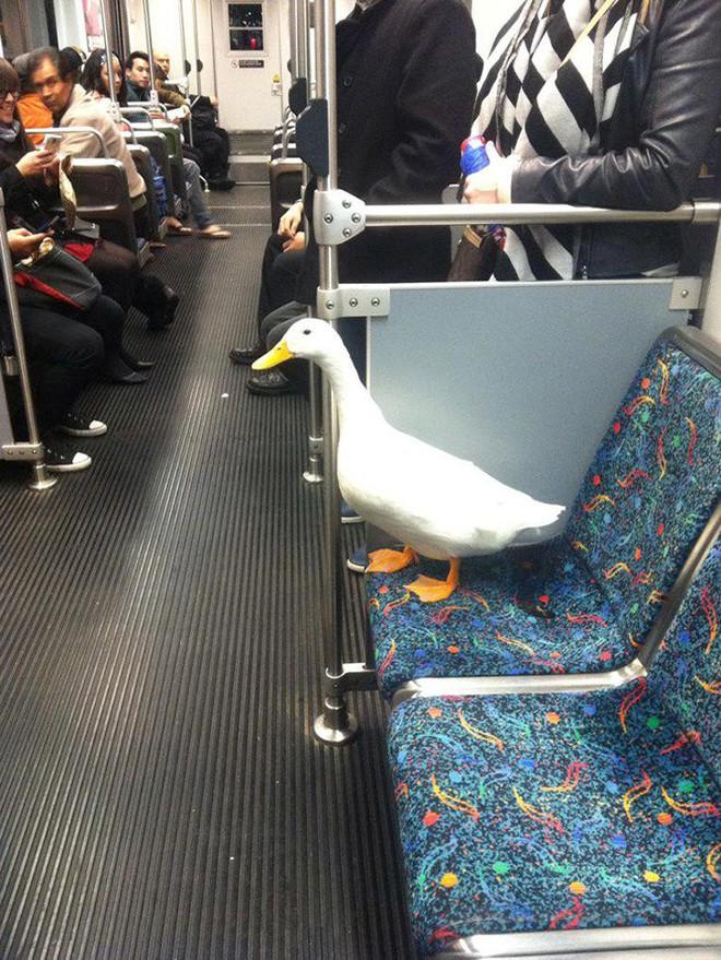 [Vui] 20 bức ảnh sẽ chứng minh cho bạn thấy: Thế giới trên tàu điện ngầm luôn ngập tràn những điều kỳ lạ - Ảnh 14.