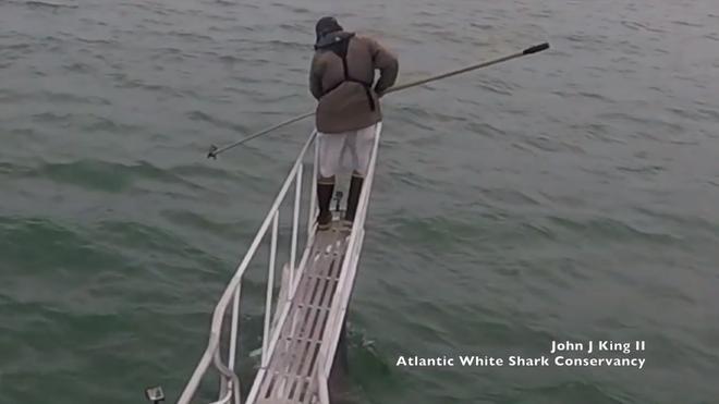 [Video] Cá mập trắng vọt lên khỏi mặt nước, định đớp nhà nghiên cứu đang đứng trên thuyền - Ảnh 1.