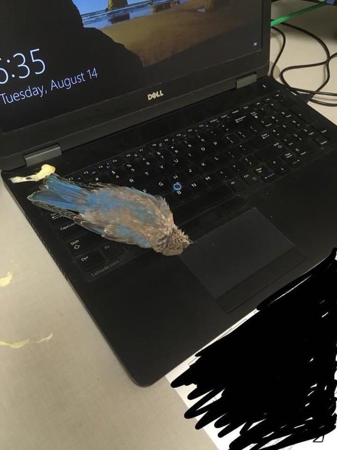 Đang yên đang lành, con chim bỗng bay vèo qua cửa sổ, đi nặng lên laptop của một redditor rồi lăn ra chết - Ảnh 1.
