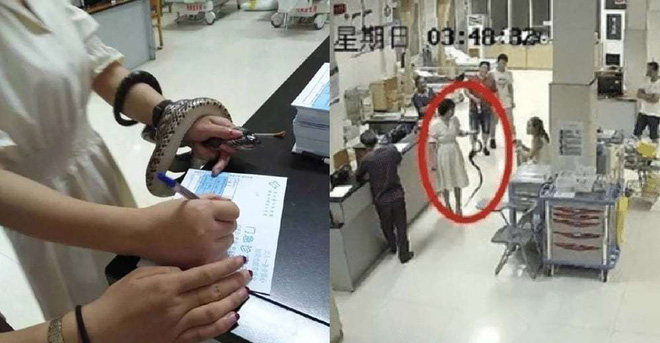 Trung Quốc: Bị cắn nhưng không biết là rắn gì, cô gái bình tĩnh túm cổ nó mang đến bệnh viện - Ảnh 1.