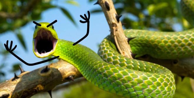Vẽ rắn thêm chân quả là ngớ ngẩn nhưng vẽ rắn thêm tay lại hay biết mấy - Ảnh 5.