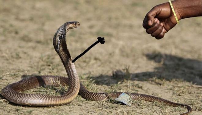Vẽ rắn thêm chân quả là ngớ ngẩn nhưng vẽ rắn thêm tay lại hay biết mấy - Ảnh 9.