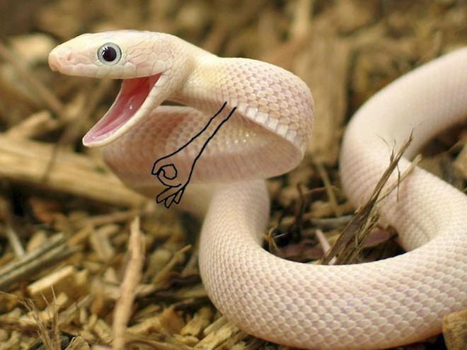 Vẽ rắn thêm chân quả là ngớ ngẩn nhưng vẽ rắn thêm tay lại hay biết mấy - Ảnh 14.