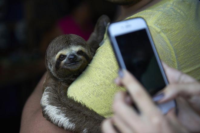 Chụp ảnh selfie cùng động vật hoang dã? Có thể bạn đang ngược đãi chúng mà không hề hay biết - Ảnh 5.