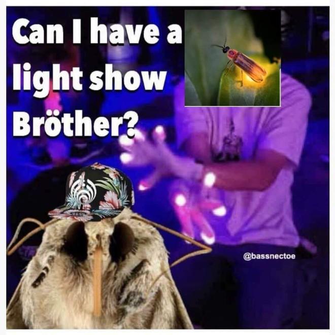 Nguồn gốc của loạt meme bướm đêm và chiếc đèn đang khuynh đảo Internet - Ảnh 9.
