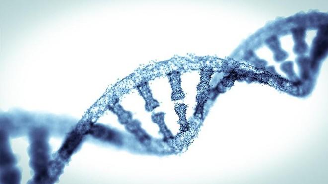 Gen là một điều kiện có thể quyết định tới trí thông minh