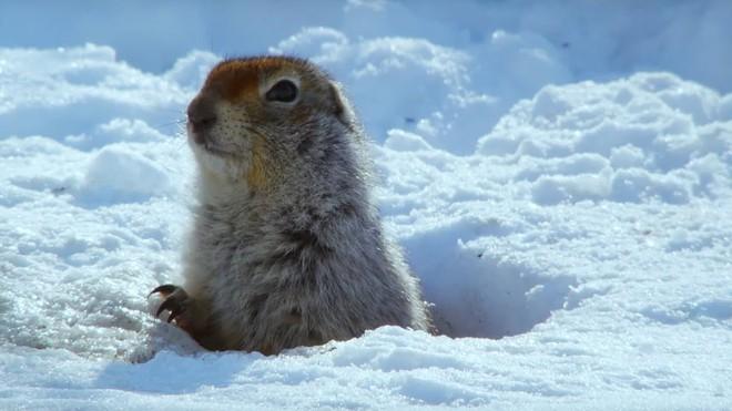 Video ghi lại cảnh thỏ ăn thịt đồng loại làm bất ngờ giới khoa học - Ảnh 5.