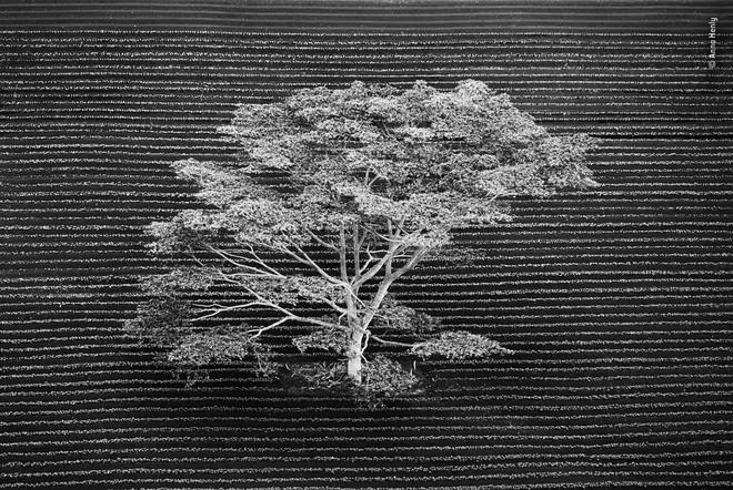 Cùng ngắm những tấm ảnh đẹp nhất trong cuộc thi The Wildlife Photographer of the Year 2018 - Ảnh 1.