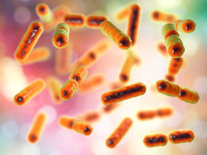 Phòng cho kịch bản diệt vong, các nhà khoa học đang muốn xây một hầm lưu trữ vi sinh vật - Ảnh 2.