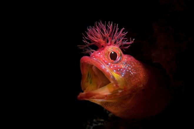 Như lạc vào thế giới khác với chùm ảnh đại dương đẹp nhất năm 2018 - Ảnh 9.