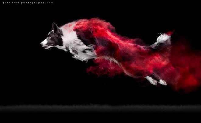 Nhiếp ảnh sáng tạo: Chụp hình chó cưng với bột màu theo phong cách Color Me Run - Ảnh 1.
