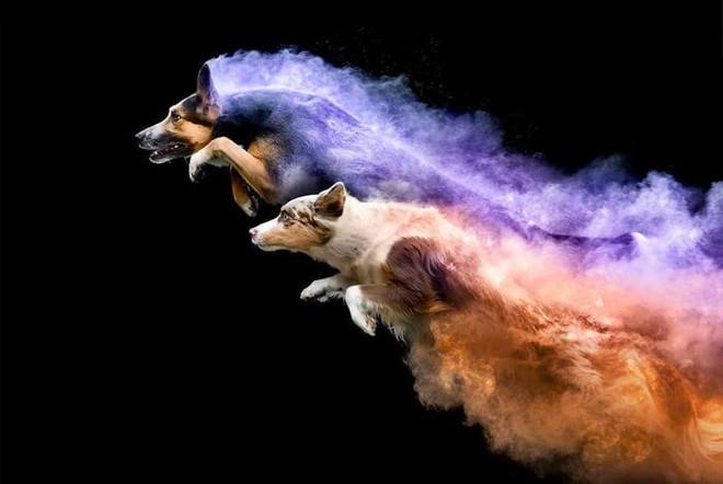 Nhiếp ảnh sáng tạo: Chụp hình chó cưng với bột màu theo phong cách Color Me Run - Ảnh 2.