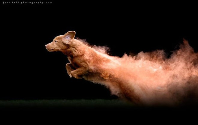 Nhiếp ảnh sáng tạo: Chụp hình chó cưng với bột màu theo phong cách Color Me Run - Ảnh 4.