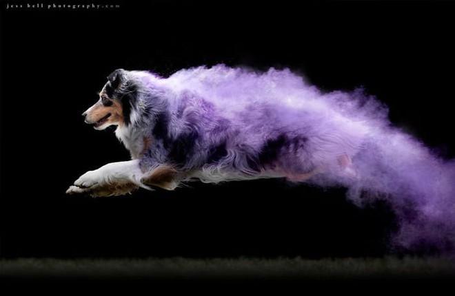 Nhiếp ảnh sáng tạo: Chụp hình chó cưng với bột màu theo phong cách Color Me Run - Ảnh 6.