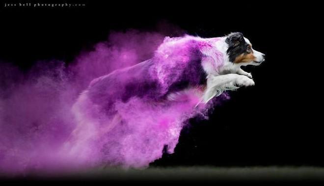 Nhiếp ảnh sáng tạo: Chụp hình chó cưng với bột màu theo phong cách Color Me Run - Ảnh 10.