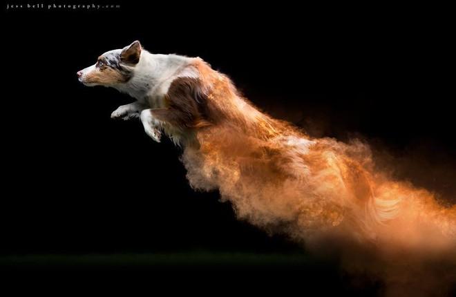 Nhiếp ảnh sáng tạo: Chụp hình chó cưng với bột màu theo phong cách Color Me Run - Ảnh 7.