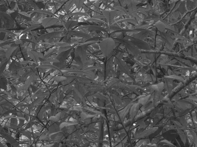 Nếu bạn thắc mắc cây hiện ra trong mắt chim như thế nào, thì mời bạn xem ảnh - Ảnh 3.