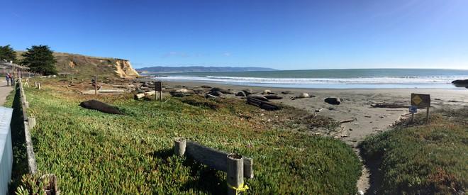 Lợi dụng chính phủ Mỹ đóng cửa, 60 con hải tượng chiếm luôn bãi biển nổi tiếng ở California và không chịu rời đi - Ảnh 2.