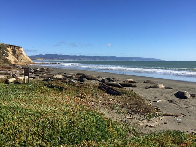 Lợi dụng chính phủ Mỹ đóng cửa, 60 con hải tượng chiếm luôn bãi biển nổi tiếng ở California và không chịu rời đi - Ảnh 3.
