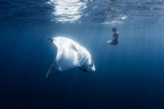 Đại dương không hề đẹp đẽ như ta tưởng, đó còn là nỗi ảm ảnh kinh hoàng với 7% người trưởng thành ở Mỹ - Ảnh 7.