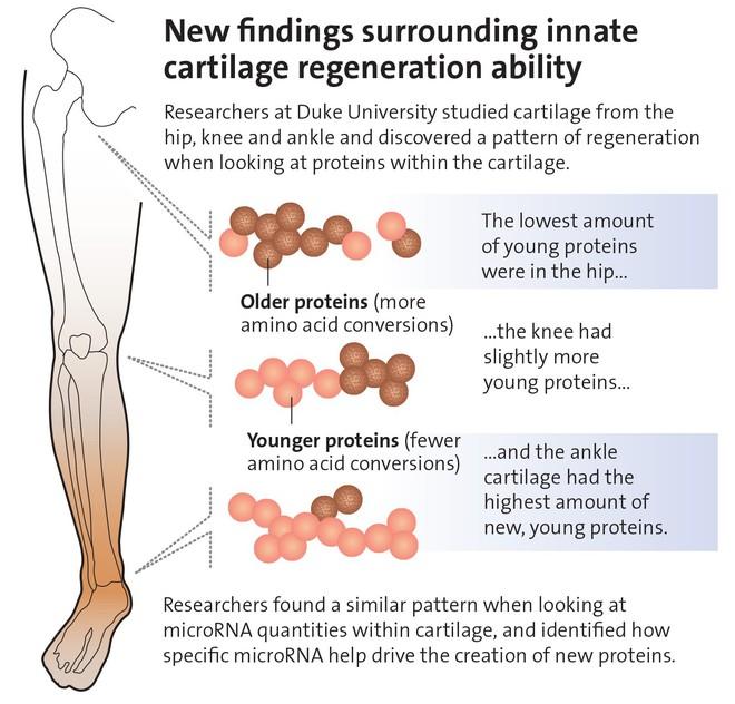 Hóa ra con người cũng có khả năng tái sinh cơ thể, nhưng bây giờ các nhà khoa học mới phát hiện ra - Ảnh 2.