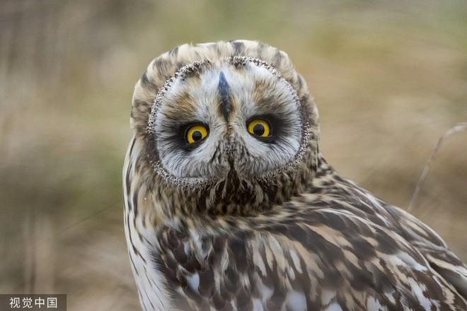 Chiêm ngưỡng bộ ảnh tạo dáng siêu đáng yêu của động vật trước ống kính máy ảnh - Ảnh 11.