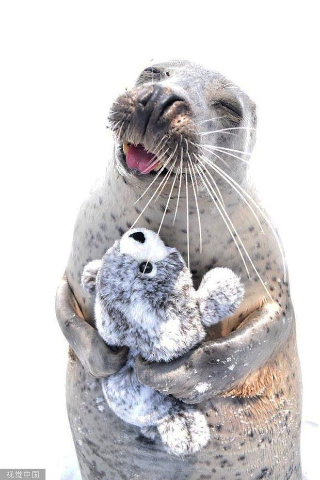 Chiêm ngưỡng bộ ảnh tạo dáng siêu đáng yêu của động vật trước ống kính máy ảnh - Ảnh 7.