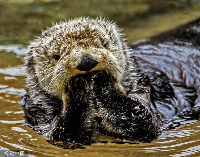 Chiêm ngưỡng bộ ảnh tạo dáng siêu đáng yêu của động vật trước ống kính máy ảnh - Ảnh 5.