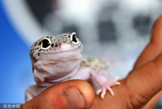 Chiêm ngưỡng bộ ảnh tạo dáng siêu đáng yêu của động vật trước ống kính máy ảnh - Ảnh 4.